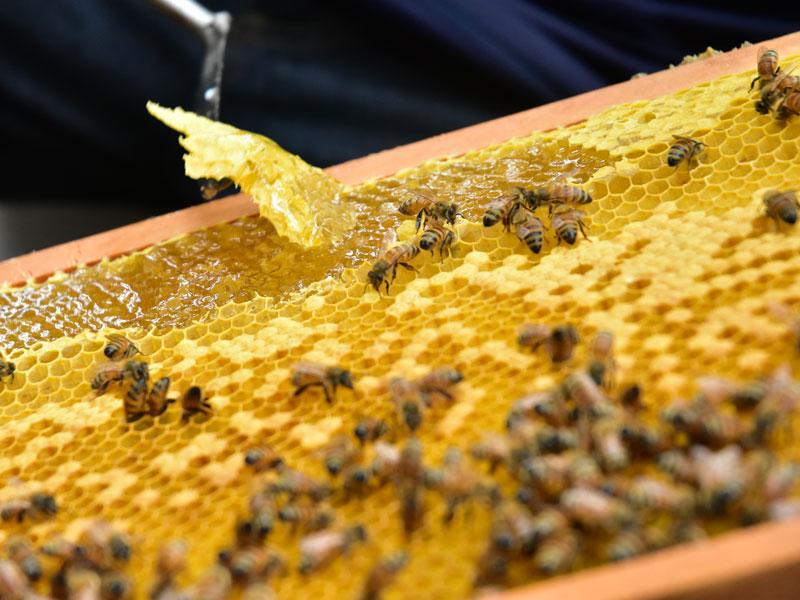 小蜜蜂教室05
