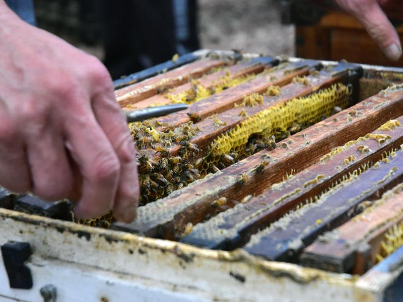 小蜜蜂教室08